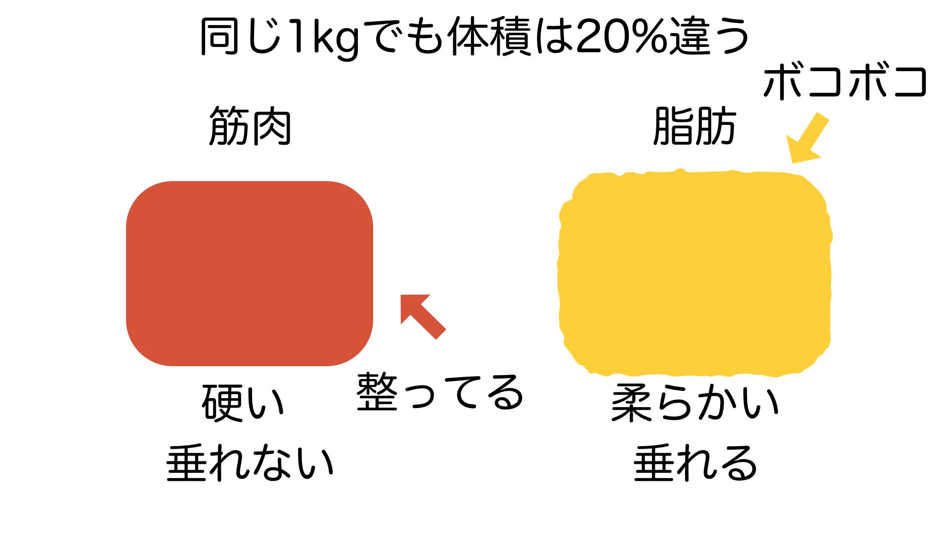 脂肪と筋肉のサイズ